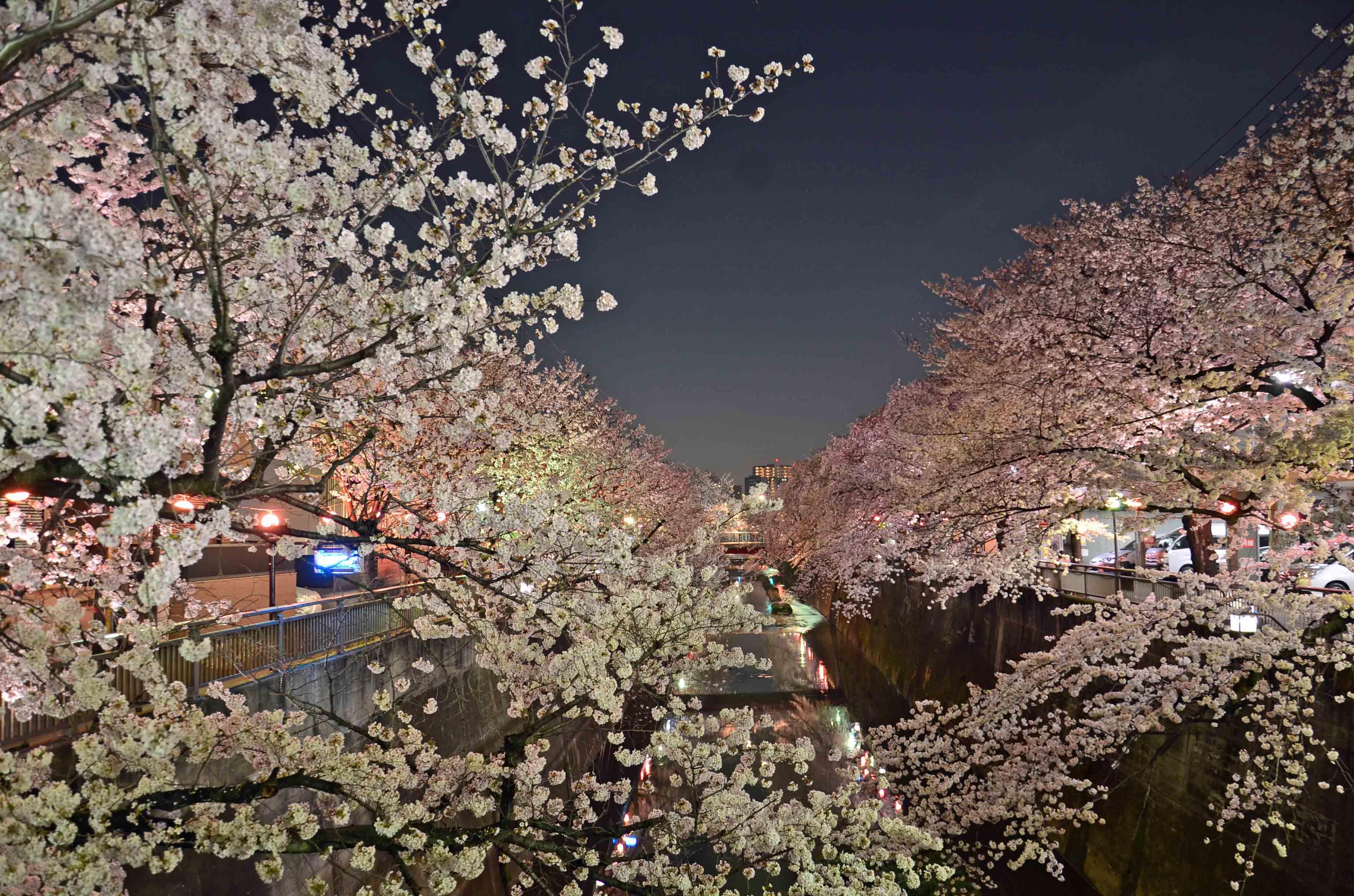 石神井川ライトアップ