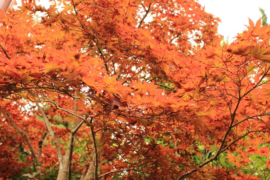 ガラスの森美術館紅葉