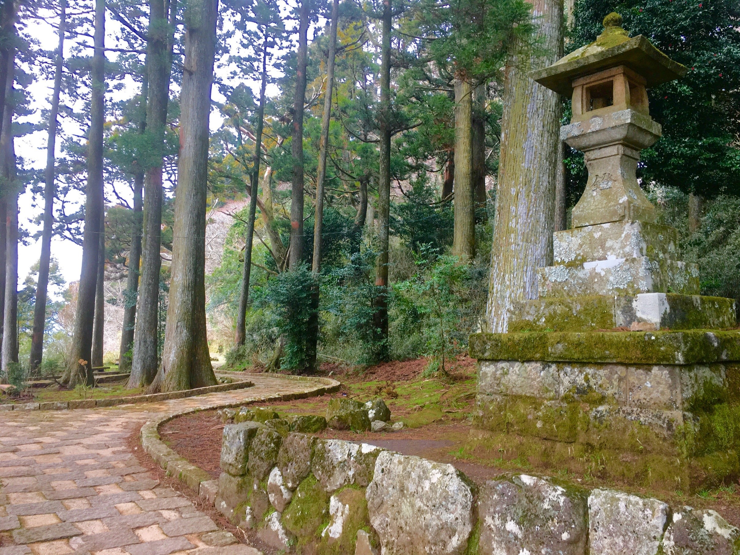 箱根神社 道 写真